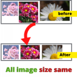 How to make sure all image size width and height are the same html css